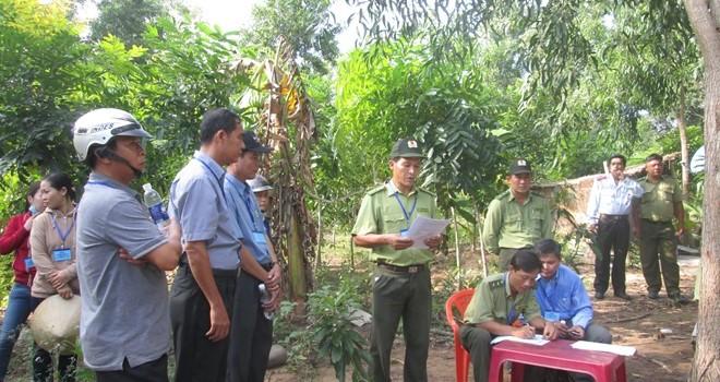 Phú Quốc: Cưỡng chế thu hồi 10.000m2 đất rừng đã bị lấn chiếm trồng cây