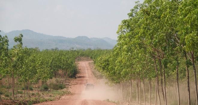 Gia Lai: Khởi tố nguyên giám đốc công ty phá rừng