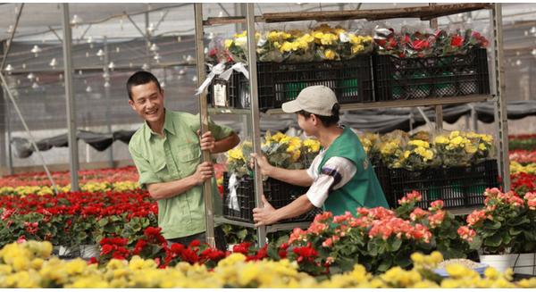 Chân dung đại gia kín tiếng đưa Việt Nam lên bản đồ hoa thế giới