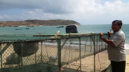 Ngư dân méo mặt vì bị ép giá tôm hùm