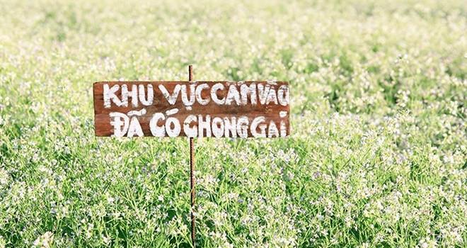 Khách đổ về Đà Lạt, nông dân bỏ việc canh vườn
