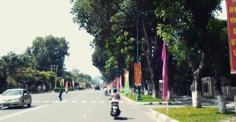 """Tây Ninh """"xin ý kiến"""" người dân để trảm 100 cây xà cừ 30 năm tuổi"""
