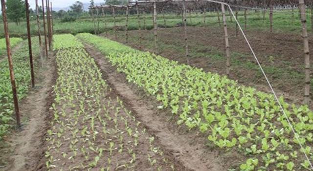 Đà Nẵng hủy phê duyệt quỹ đất dự án trồng rau của người Trung Quốc