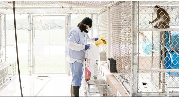 Vắc-xin biến nuôi khỉ thành ngành kinh doanh lớn tại Mỹ như thế nào?