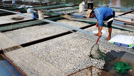 Cá bè chết hàng loạt ở Đồng Nai là do thiếu ôxy