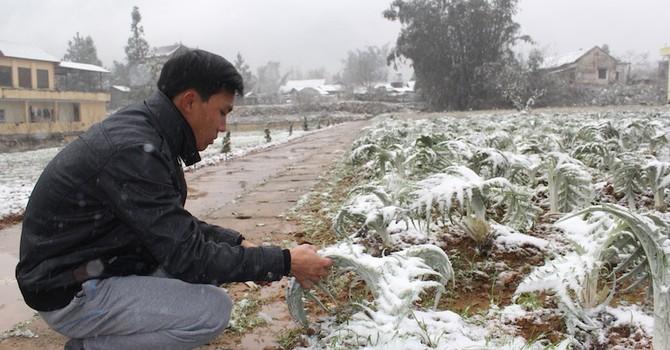 Mưa tuyết vùi lấp hàng tỷ đồng của nông dân