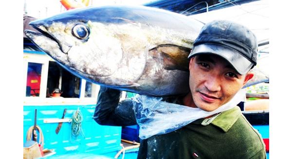 Cá ngừ và mực Trường Sa, Hoàng Sa vào giỏ quà Tết