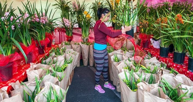 Người Việt tại Mỹ kể chuyện bán hoa Tết