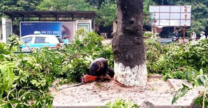 Hà Nội sẽ cử cán bộ đi Singapore, Trung Quốc học cắt tỉa, trồng cây xanh