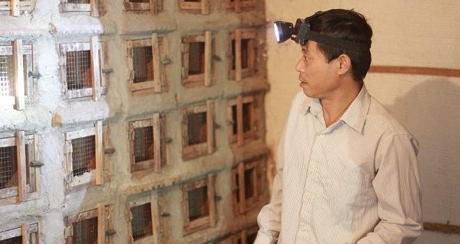 Trung Quốc ngưng mua rắn, người nuôi bỏ chuồng