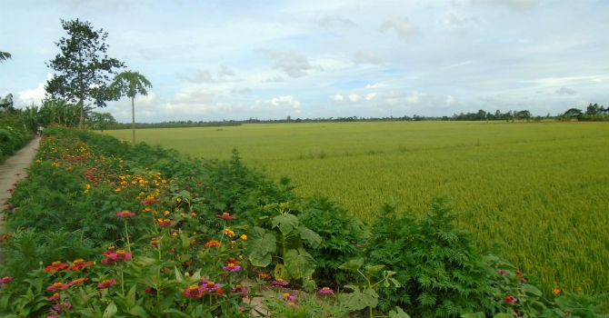 Sóc Trăng, Nghệ An được chuyển hàng chục hecta đất nông-lâm nghiệp sang làm dự án