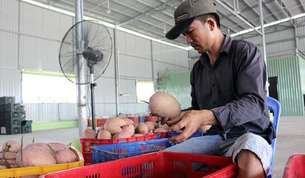 Người Hàn Quốc mê xoài, dứa Việt Nam