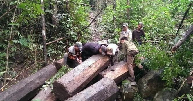 Kỷ luật 15 cán bộ lâm nghiệp vì rừng bị rút ruột
