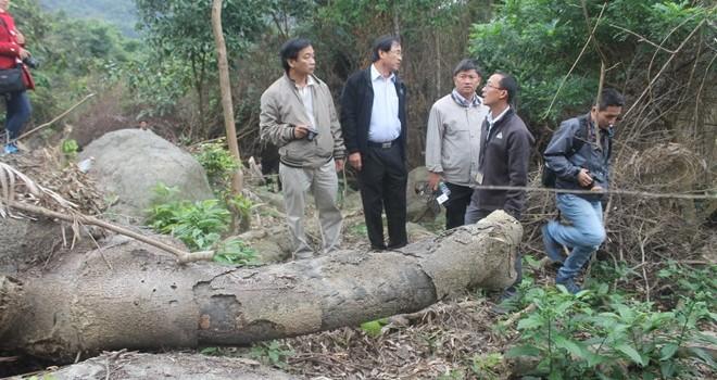 Đà Nẵng: Thu hồi toàn bộ đất giao khoán xảy ra phá rừng