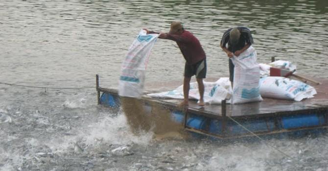 Nhập cả trăm tấn kháng sinh cấm để… nuôi trồng thủy sản