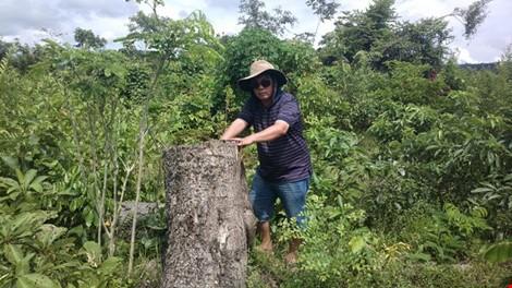 Bắt phó giám đốc và nhân viên bảo vệ rừng thuê… lâm tặc phá rừng