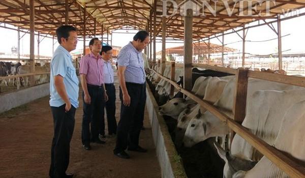 """Câu chuyện về """"biệt thự bò"""" của tân Chủ nhiệm Văn phòng Chính phủ"""