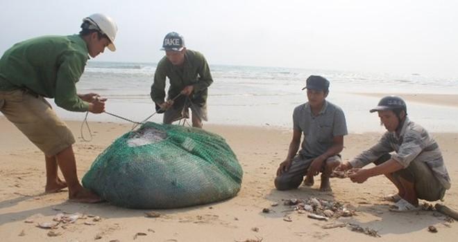 Sau thảm họa cá chết: 4 ngư dân ra khơi một đêm, chia nhau 20.000 đồng
