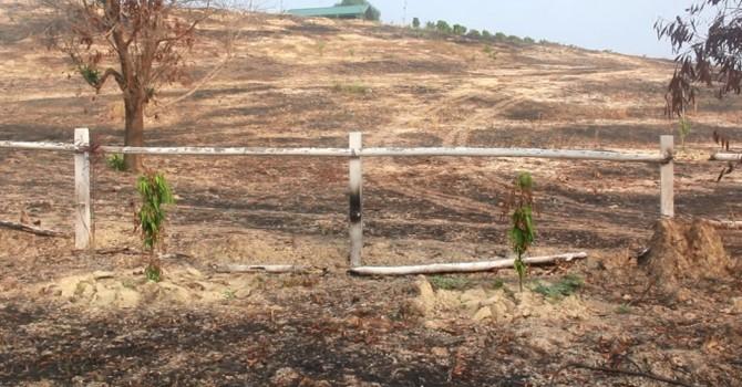 Lâm Đồng: Dự án trường đua ngựa nghìn tỷ chỉ để nuôi một con... ngựa ốm