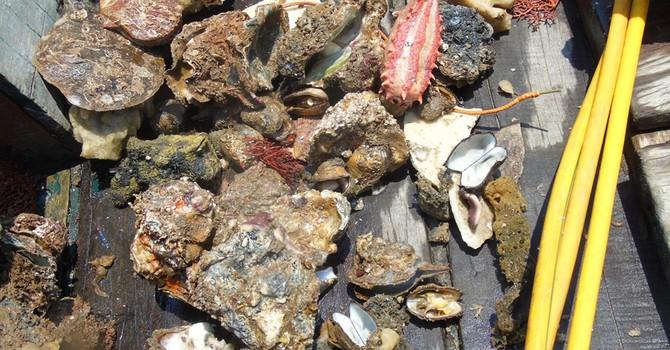 """Lặn biển Quảng Bình tìm nguyên nhân """"lưới cá bỗng sạch như giặt"""""""