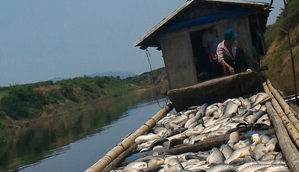 Công ty mía đường gây ô nhiễm sông Bưởi đền bù cho người nuôi cá 1,4 tỷ đồng