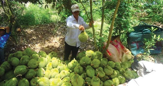 Tin đồn xấu về nông sản thực phẩm, ai chịu trách nhiệm?