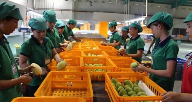 Rau quả Việt hưởng lợi từ căng thẳng Trung Quốc - Philipines