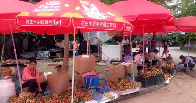 Buôn vải thiều sang Trung Quốc: Vượt cửa khẩu giá gấp đôi