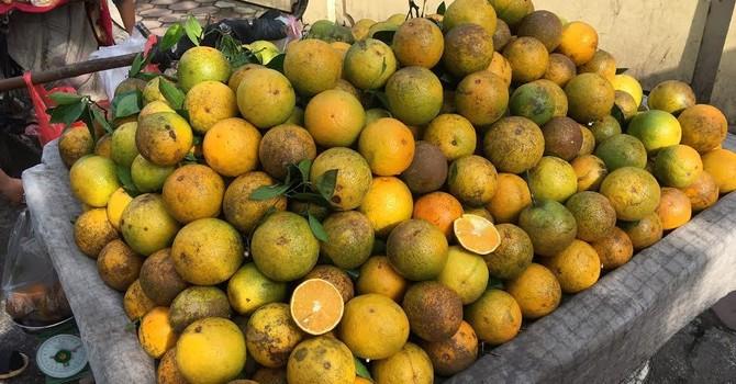 Nho Tàu, cam Trung Quốc không hạt: Bà nội trợ hớ nặng