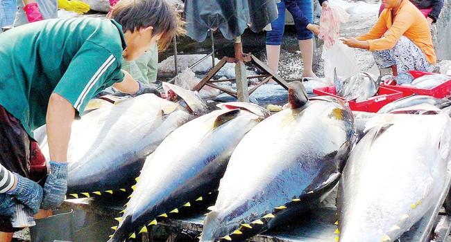 Tổ chức chợ cá công khai để ngư dân không bị ép giá