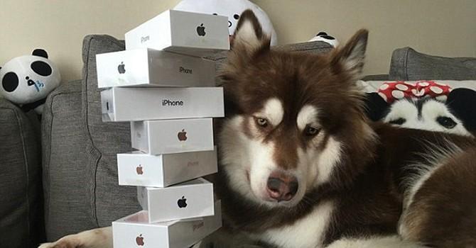 """Thiếu gia Trung Quốc """"chơi ngông"""" mua 8 chiếc iPhone 7 cho chó cưng"""