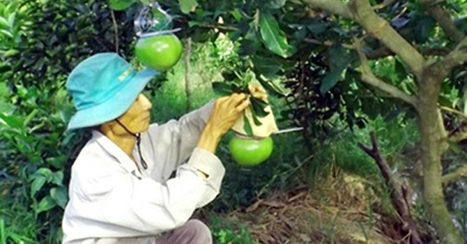 Tất bật chuẩn bị trái cây tạo hình bán Tết