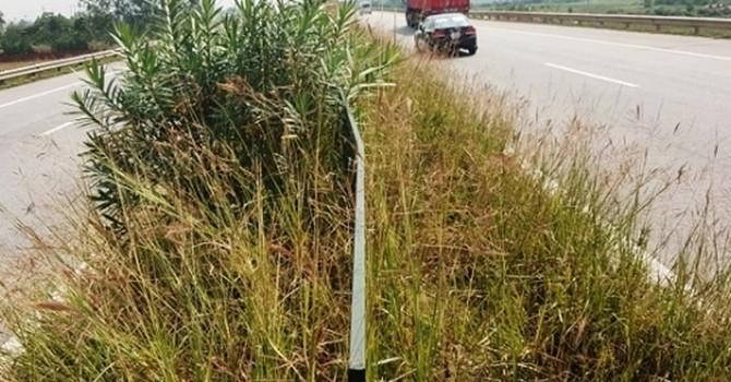 Cắt giảm chi phí: Đoạn Quốc lộ 18 do Hà Nội quản lý cỏ mọc quá tiêu chuẩn cơ sở