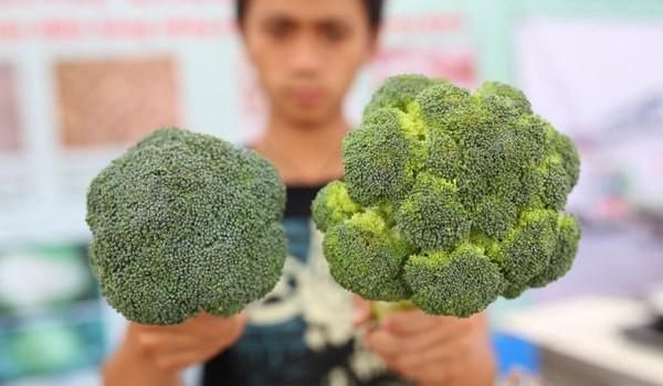 Người Trung Quốc ăn rau quả của Việt Nam nhiều hơn gấp 4 lần