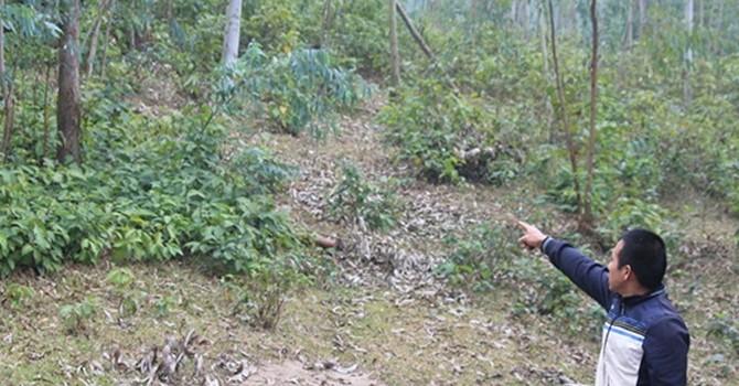 Siêu nghĩa trang lấn rừng Tam Đảo: Lừa dân mua đất rừng?