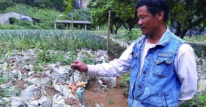 Doanh nghiệp bội tín, nông dân lâm cảnh nợ nần