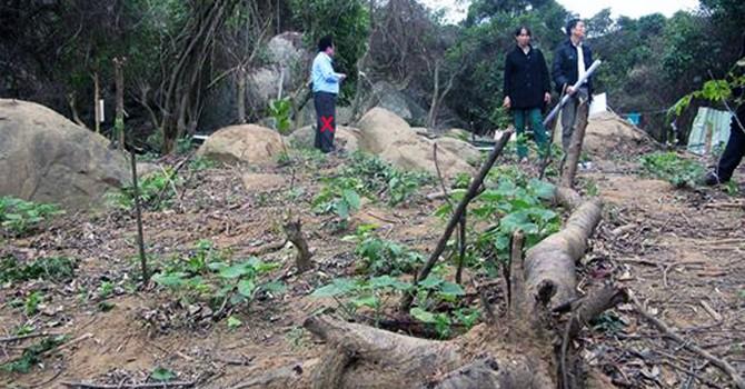 Đà Nẵng: Hơn 3 hecta rừng Sơn Trà đã bị triệt tiêu