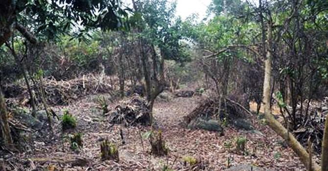 Đà Nẵng: Thu hồi 1.072ha rừng giao khoán ở khu bảo tồn thiên nhiên Sơn Trà