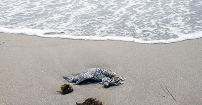 """Đà Nẵng khẳng định """"thông tin cá chết do ô nhiễm là không chính xác"""""""