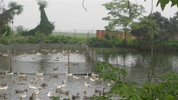 BĐS nghìn tỷ của Nam Cường, Geleximco thành vườn chuối, chuồng vịt