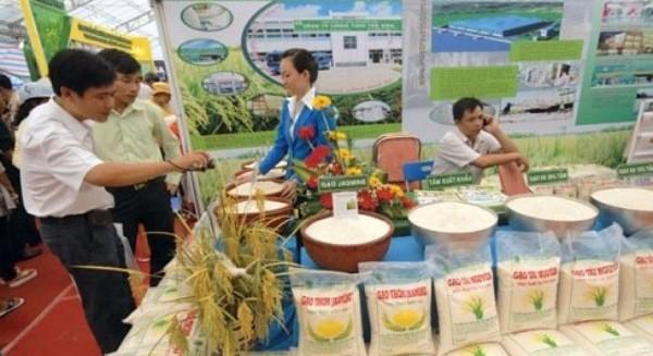 Làm sao để Việt Nam không thua Campuchia về thương hiệu gạo xuất khẩu?