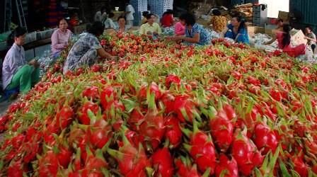 Trung Quốc tăng cường nhập khẩu rau quả Việt Nam