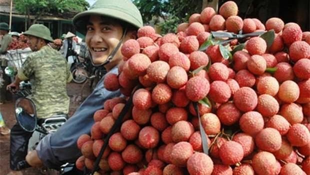 Trái vải tươi của Việt Nam được xuất khẩu vào Úc, Canada