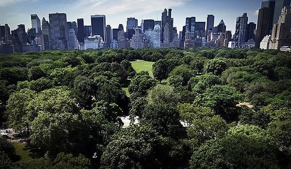 """Cây xanh: """"Vệ sĩ"""" của các thành phố Mỹ trước mưa bão"""