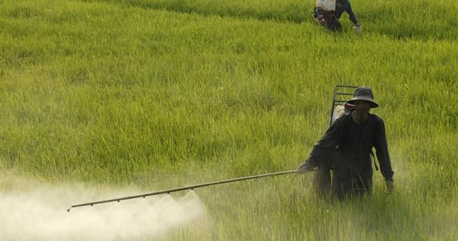 Bảy tháng, Việt Nam nhập trên 9.000 tỷ thuốc trừ sâu và nguyên liệu