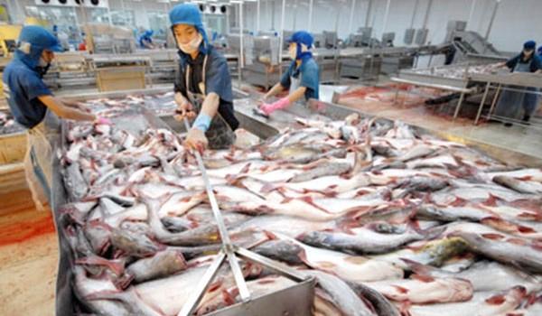 Xuất khẩu cá tra sang EU giảm mạnh