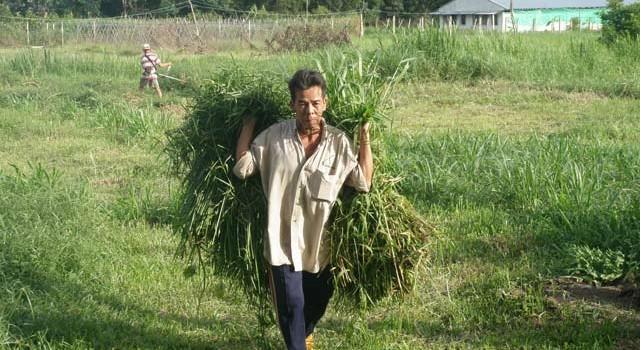 Bỏ đất hoang vẫn... lợi hơn trồng lúa