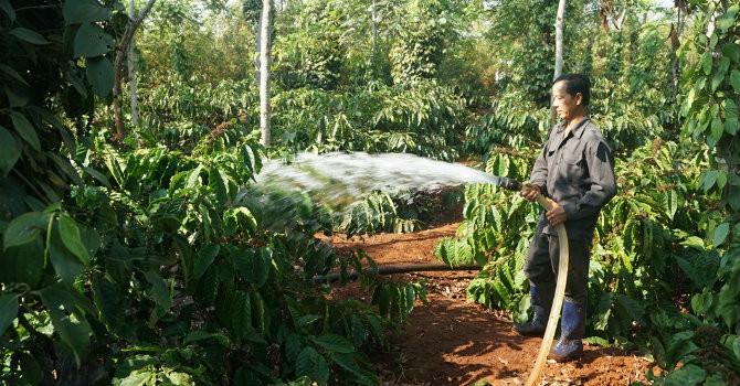 Sáng kiến của người Việt: Tiết kiệm nước tưới vườn cà phê bằng vỏ lon sữa