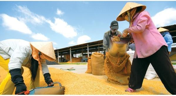 """Thị trường gạo: Mỗi năm, Việt Nam """"đổ bỏ"""" 4.000 tỷ đồng tiền cám"""