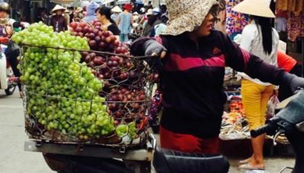 """Nho Ninh Thuận """"đắng"""": Không nên đổ thừa cho nho Trung Quốc"""